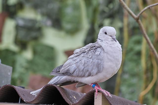 Vogelschutznetze gegen Tauben