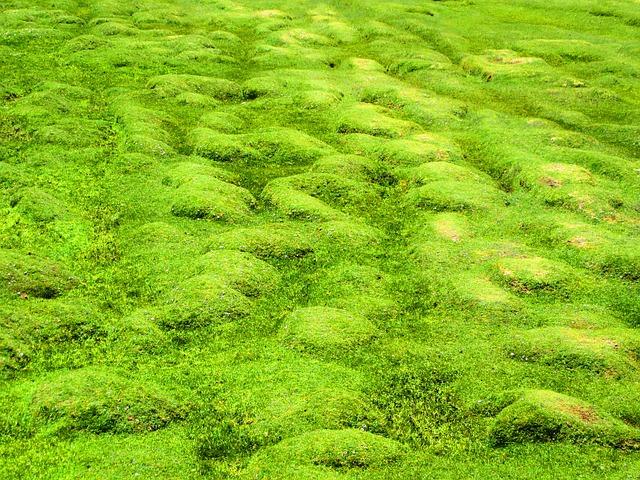 Gras schneiden ohne Rasenmäher