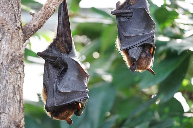 Fledermauskasten selbst bauen um die Tiere zu schützen