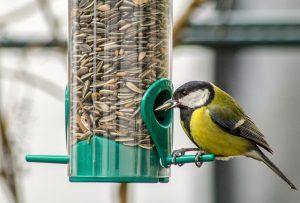 Futter für Vögel im Vogelhaus
