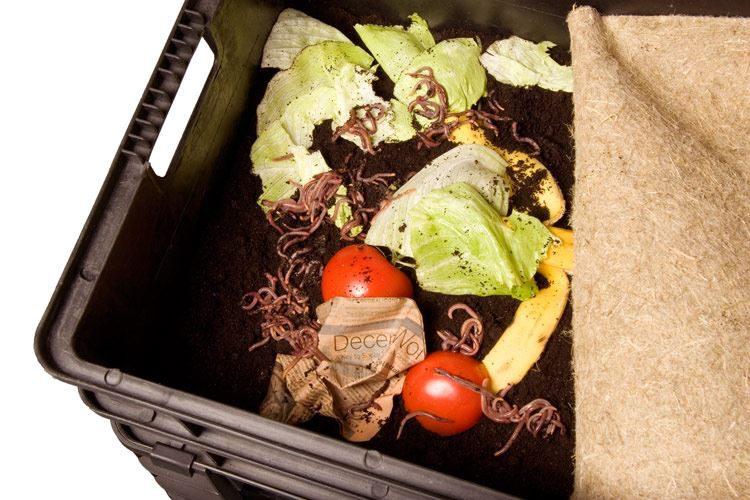 Wurmkisten – so kompostiert man mit Würmern!