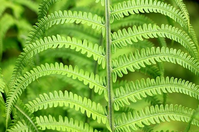 Die schönsten und faszinierendsten Pflanzen für den Garten