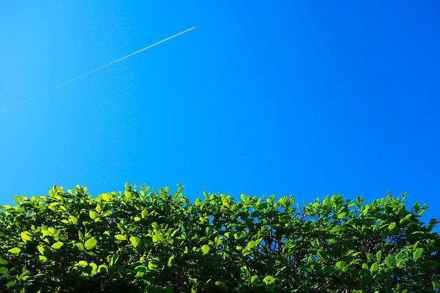Ratgeber Hecke pflanzen – wichtige Hinweise