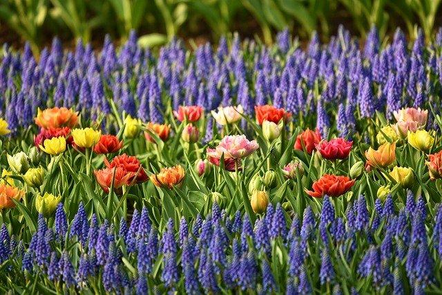 Blumenbeete sind eine Zierde für jeden Garten